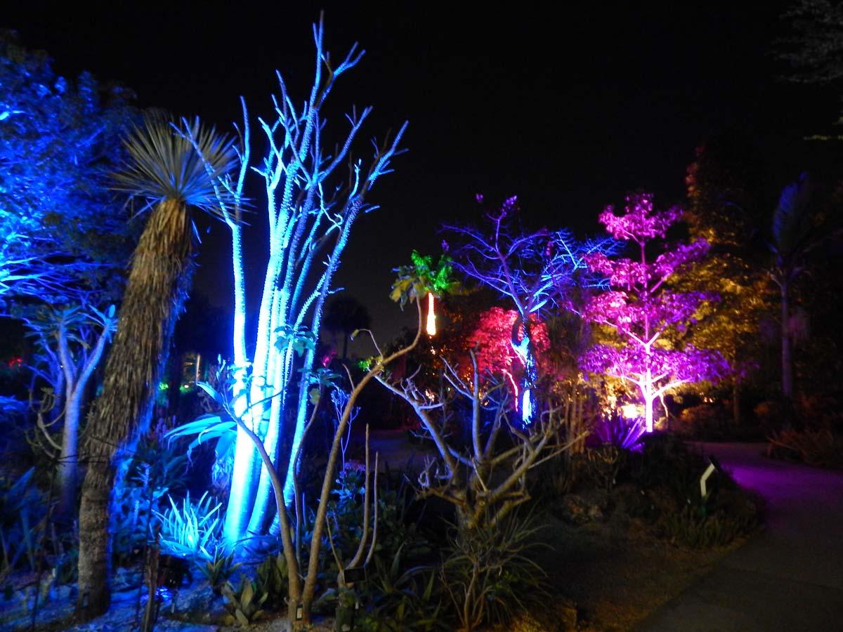 Night Lights in the Garden
