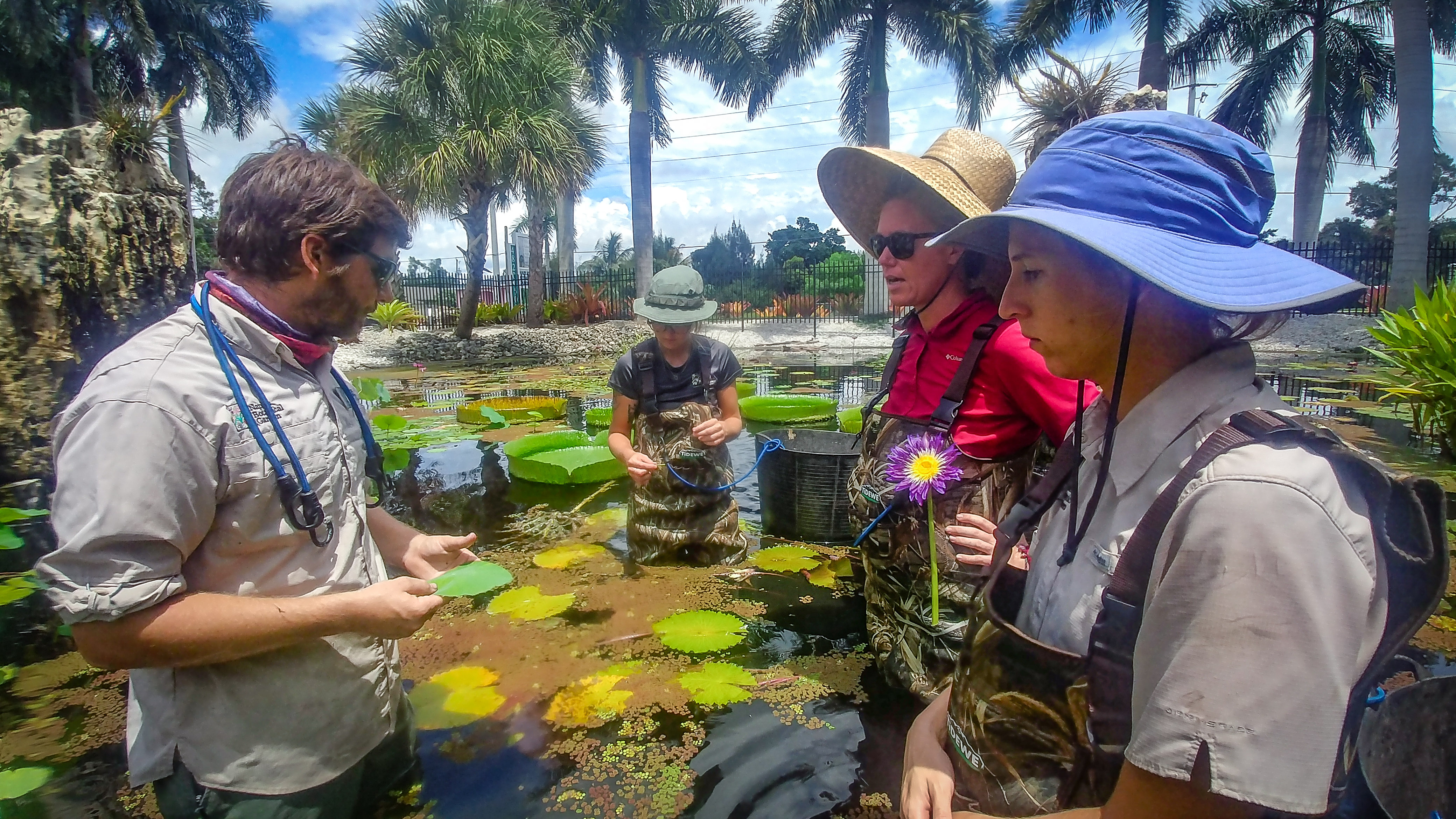 Aquatic Areas Manager Danny Cox demonstrates Waterlily care to Gardeners at Naples Botanical Garden