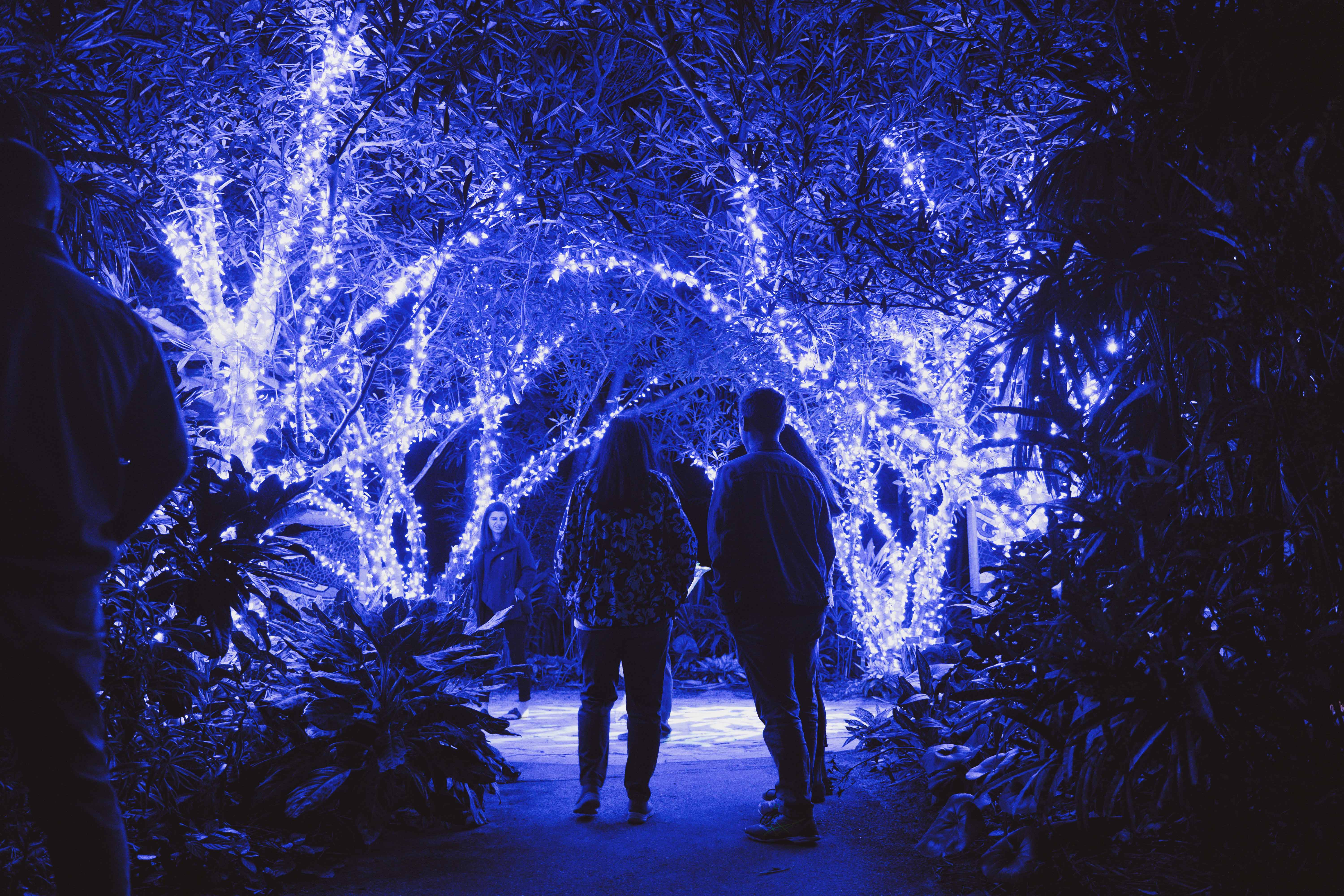 Silhouettes of people standing around trees with blue string lights on them at Night Lights in the Garden