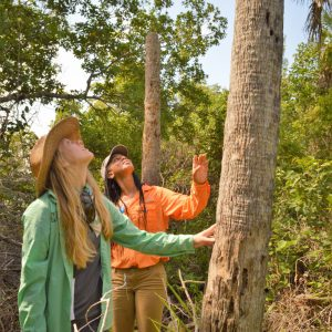 Naples Botanical Garden Curator of Education Mary Helen Reuter and Shannan Cartwright, of the Bahamas National Trust, examine a thatch palm on Keewaydin Island. The Bahamas National Trust is among our conservation partners.